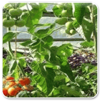 Branche Direktvermarkter, Obst, Gemüse, Gärtnerei